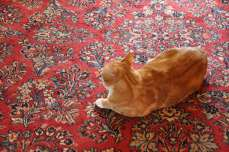 A cat on a rug.