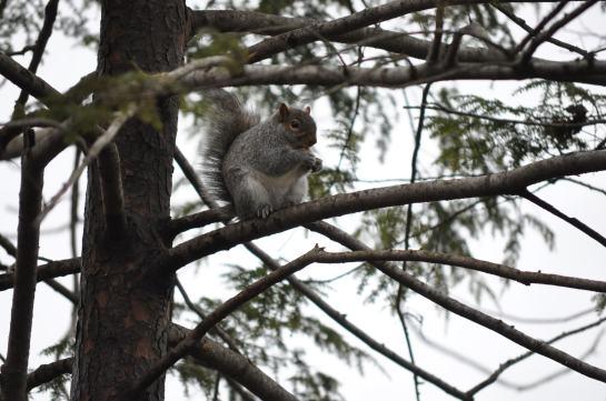 Tripod enjoying his peanut high up in a tree.