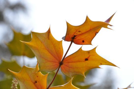 Spiky leaves on a bush.