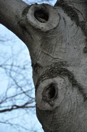 The tree already supports many residents.