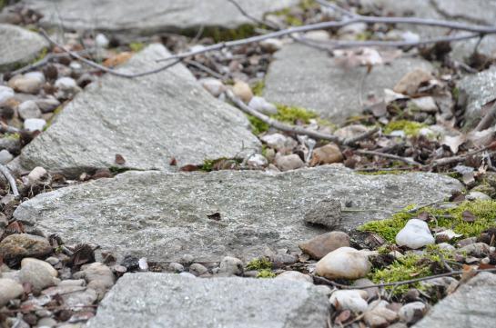 Several flat stones.