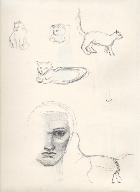 A sketch book page with line drawings of cats in several different poses and a partially finished shaded face.