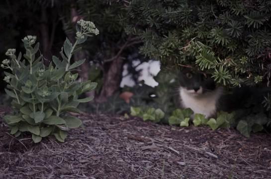 A skinny cat lurking under a bush.