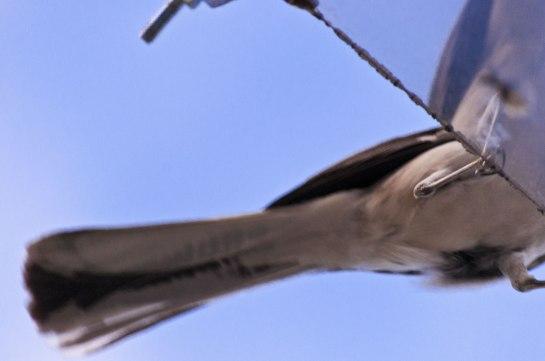 A bird's bottom.
