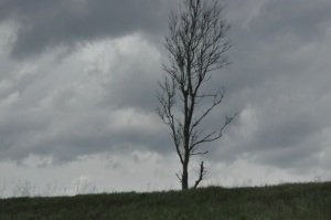 A photograph of a lone, leafless tree on top of a hill silhouetted against a dark, cloudy sky.
