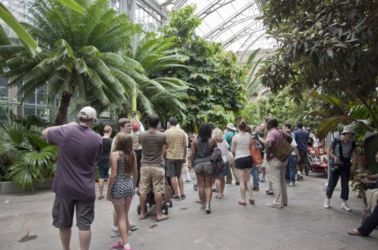 A crowd of people inside a conservatory.