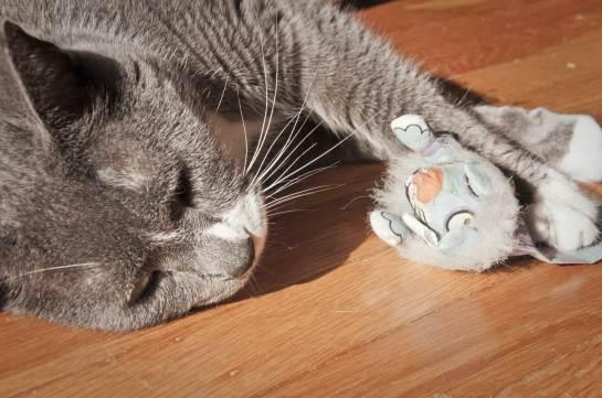 Cat cuddling a toy.