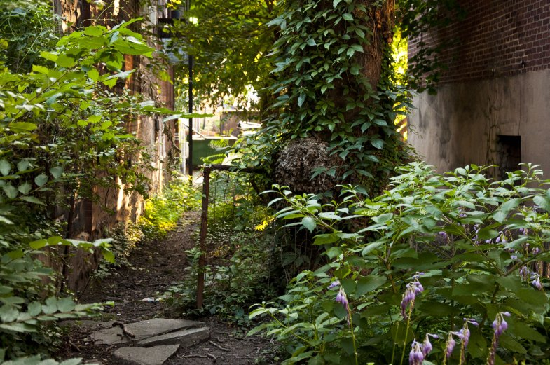 An overgrown yard between two rowhouses.