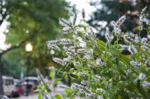 sidewalk_flowers