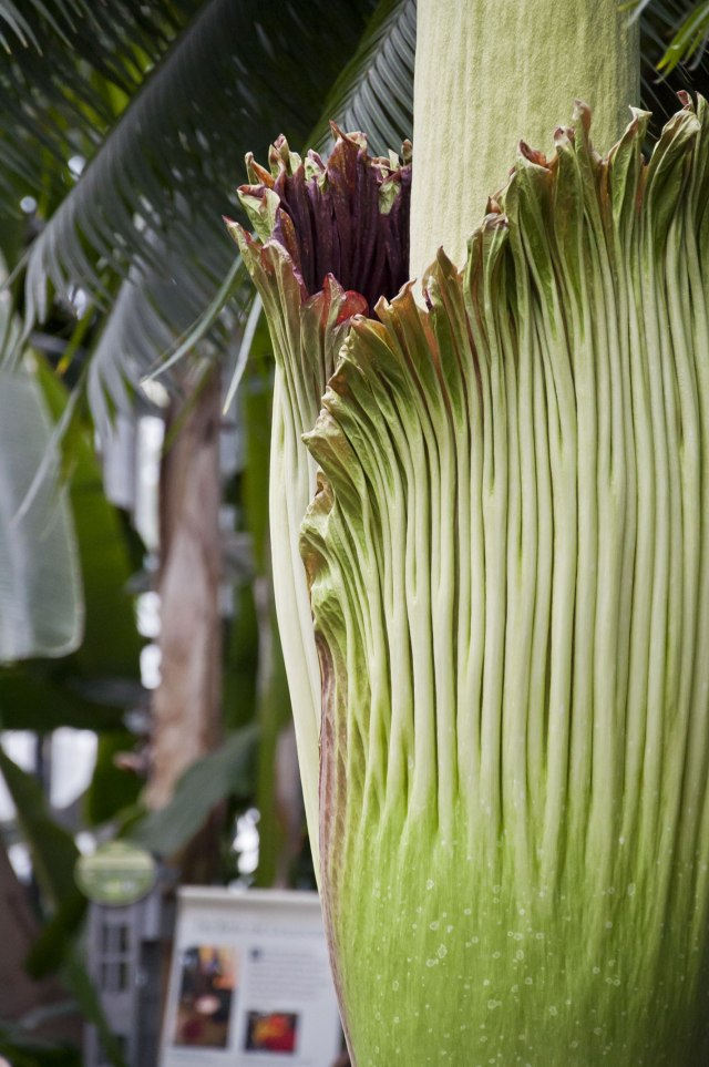 spathe_at_430