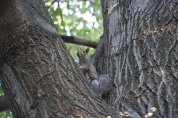 """What is a walk without squirrels. He was hiding on the other side of the tree. I'm sure the neighbors would have thought I was crazy if they'd stepped outside and heard me saying, """"Come here. Let me take your picture."""""""