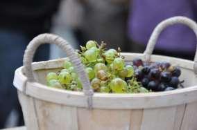 basket of grapes