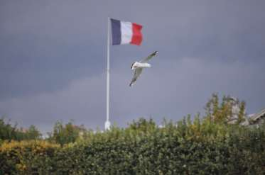 gull and flag