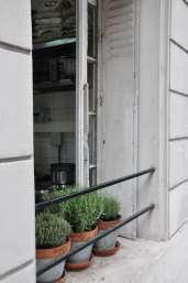 restaurant window with pots of herbs