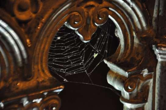 spider_web_1