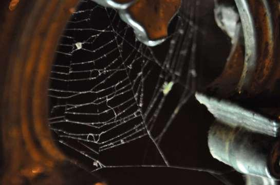 spider_web_2