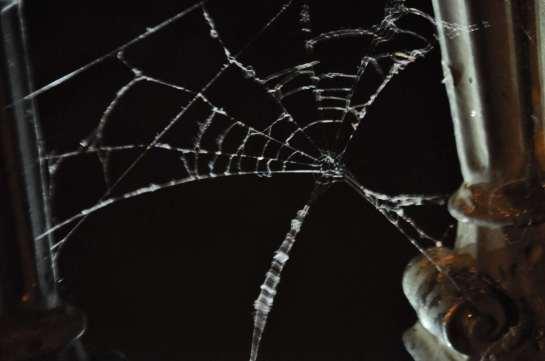 spider_web_3