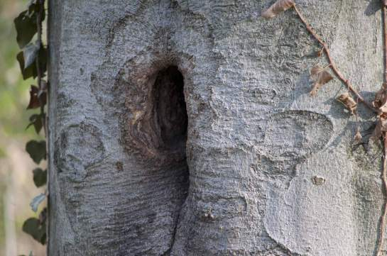 Twice, on consecutive days, I've seen a squirrel come out of this hole. I'm  wondering if there's babies in there.