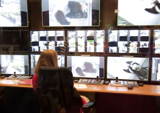 Here they can monitor all the Pandas via camera.