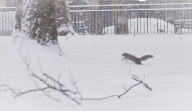 squirrel-in-snow