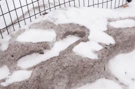 New-Snow-on-Dirty-Snow
