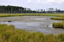 marshes 1