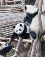 We were told to go early, since pandas sleep much of the day.