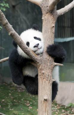 Panda-Center-8871