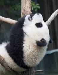 Panda-Center-8903
