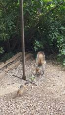 I was trying to get a photo of the chipmunk when the squirrel chased him away. The animals like to hang out under the birdfeeder and wait for seeds to drop.