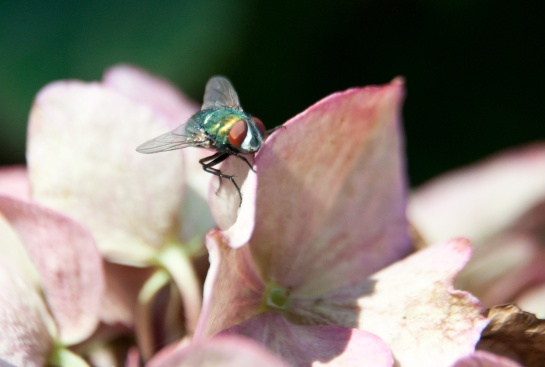Fly-and-flower