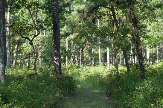 Pine-Barrens-Trail-2